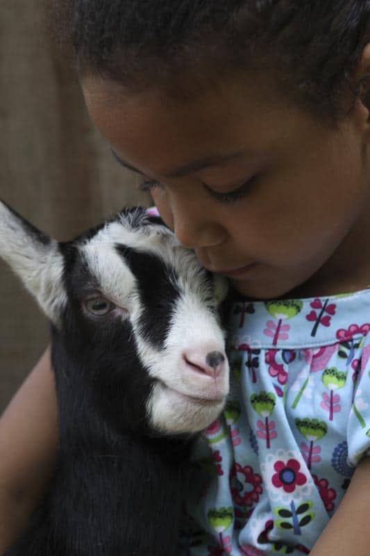 Peach-and_Goat_Cheese_Panini-3