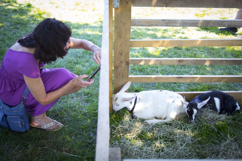 sleppy goats at the Vermont Cheesemakers Festival
