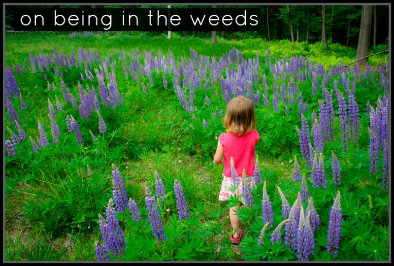 on being in the weeds ~ thursday things