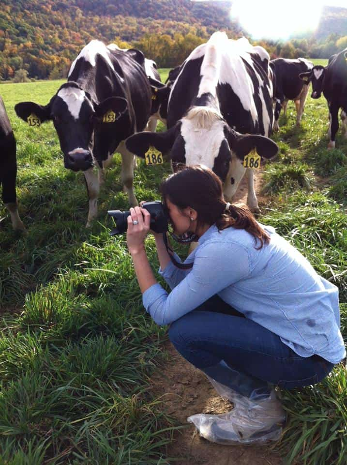 Gina from Running to the Kitchen photographing Cows