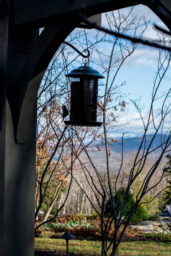 chickadee at bird feeder in Vermont