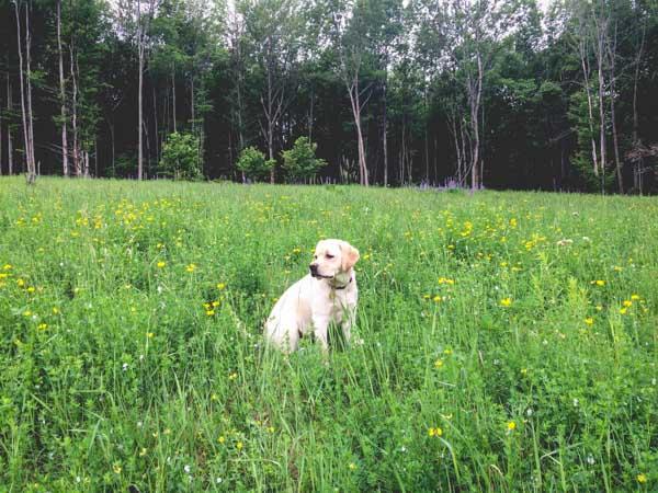 Judy T in a field