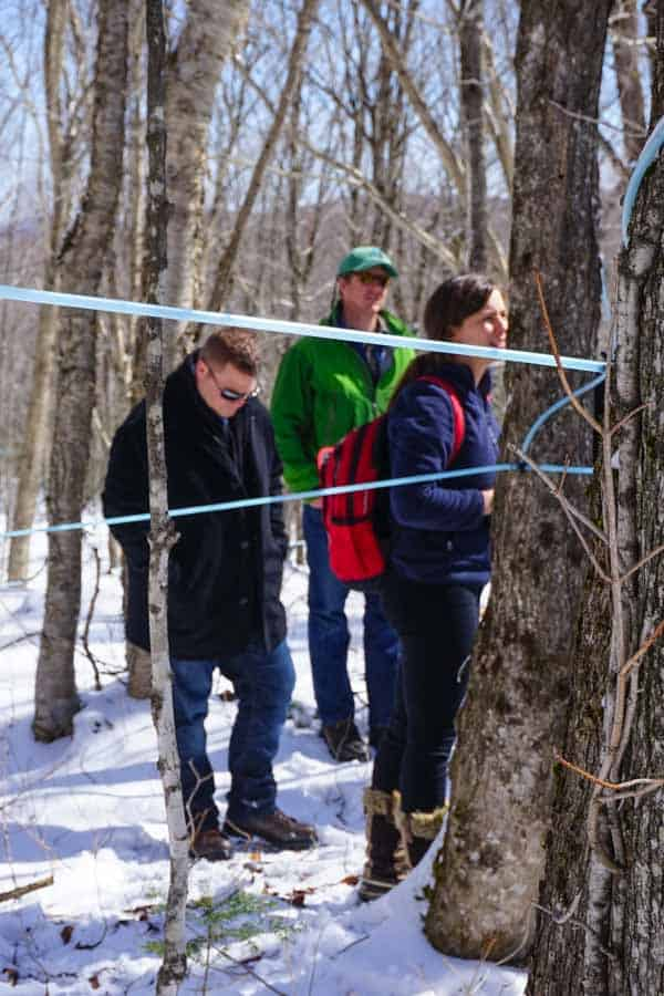 Canaan Vermont, Sugar woods with maple lines, photo by Katie Webster of HealthySeasonalrecipes.com