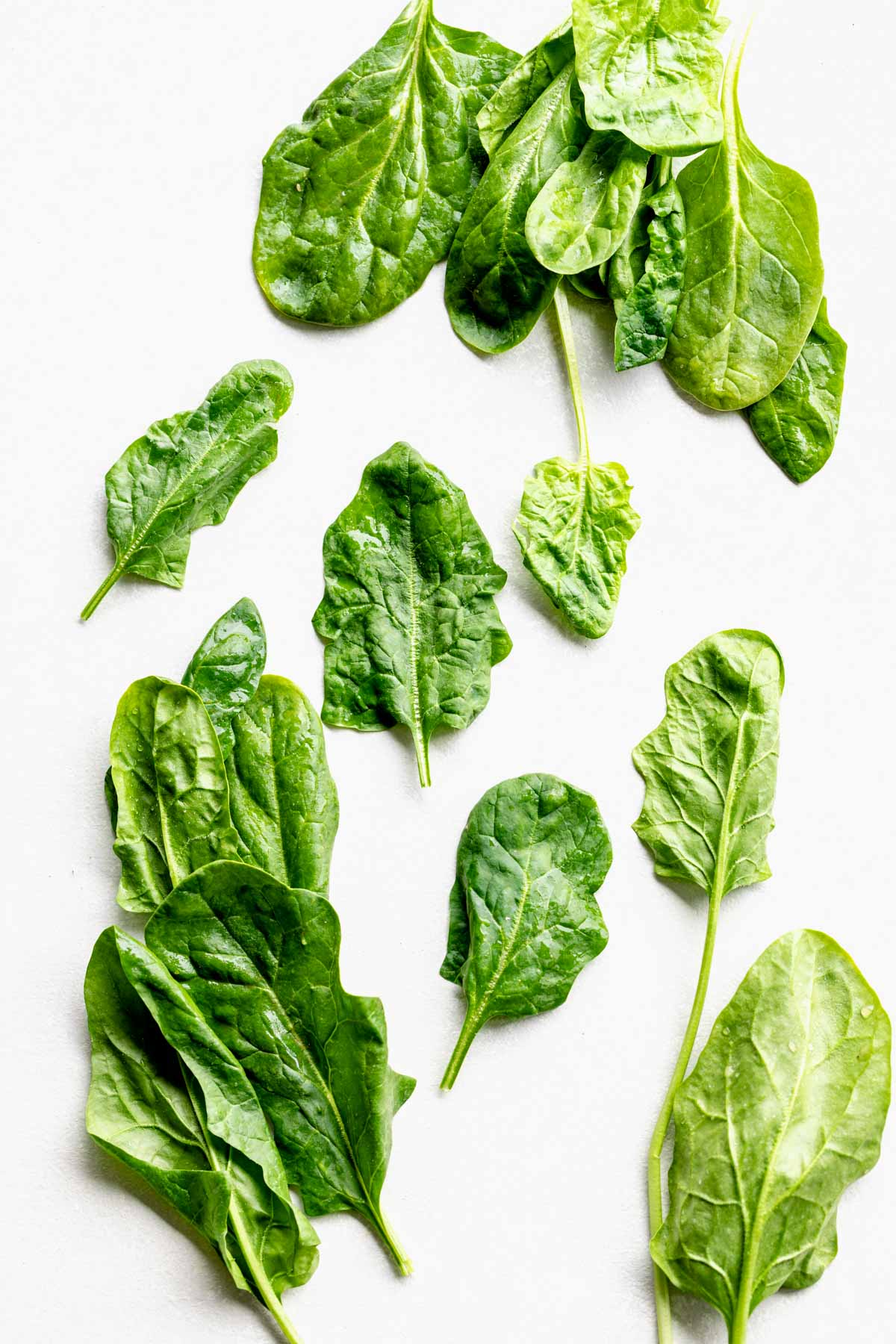 variety of spinach leaves on a white background