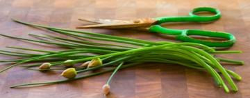 chives with blossoms and sissors