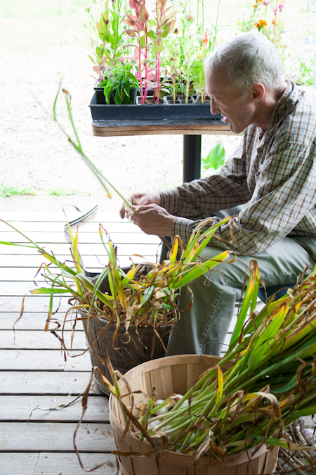 Garlic harvest at Arcana Gardens and Greenhouses in Jericho VT